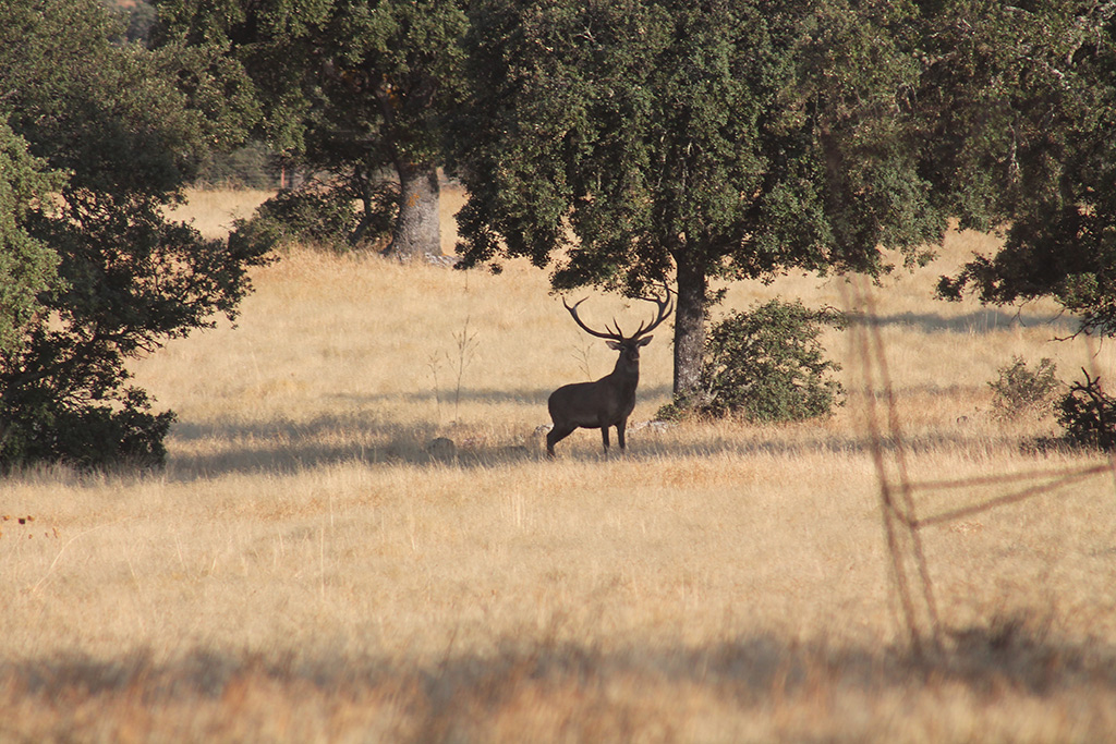 stag-and-deer-hunting-spain