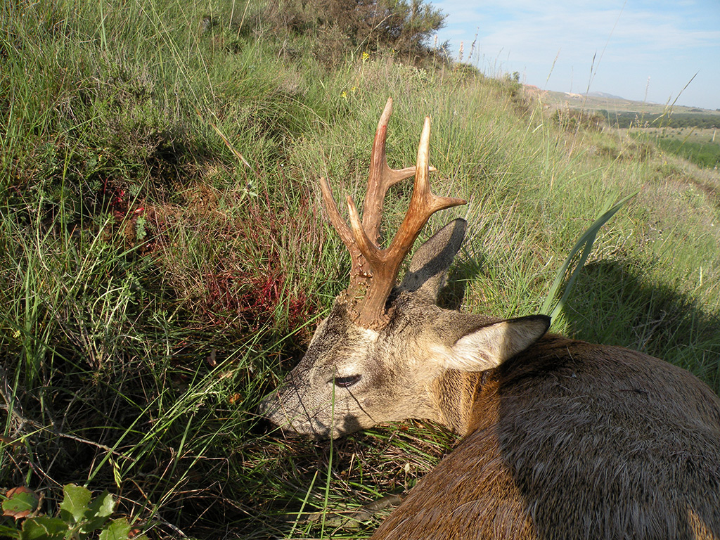hunt-ibex-roe-deer