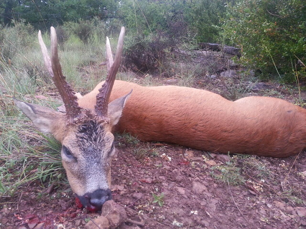 shooting-ibex-roe-deer-in-spain