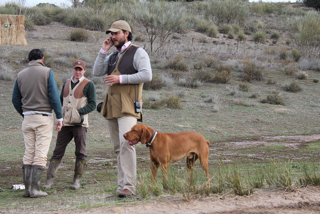 partridge-shooting-with-vizsla