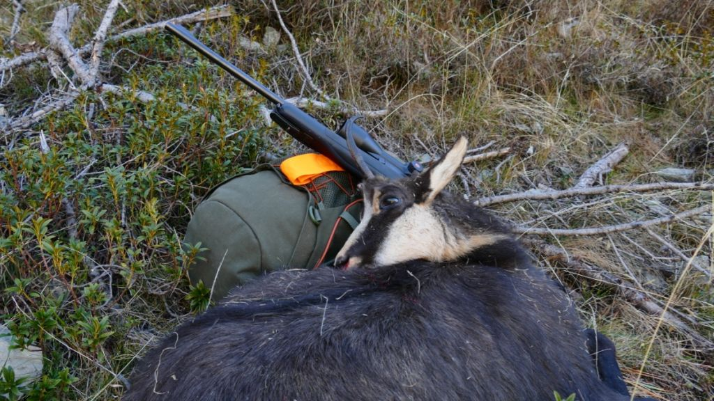 hunt-cantabrian-chamois