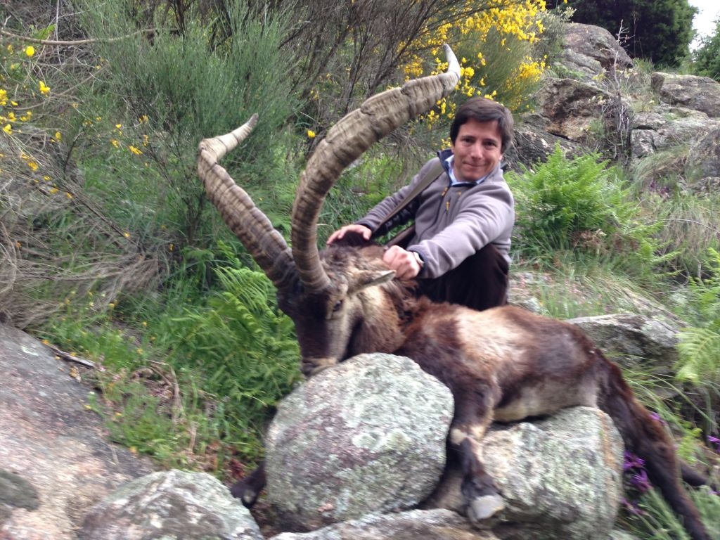 Machomontes-Gredos-hunt-spanish-ibex
